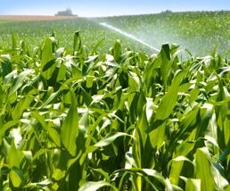 Irrigation-home.jpg