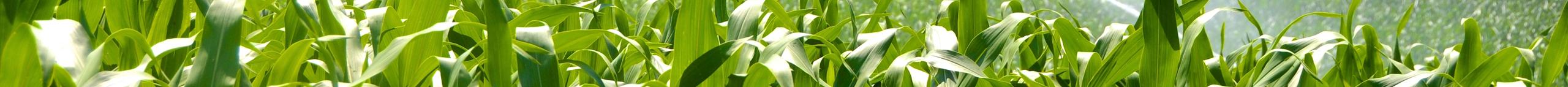 leaf_banner.png