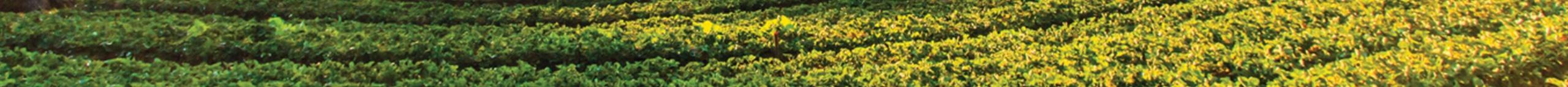 BERMAD Irrigation Blog PR 1